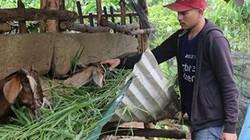 Giảm nghèo bền vững Lâm Đồng: Ưu tiên đồng bào dân tộc thiểu số
