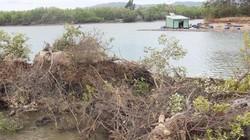 Bình Định:Tỉnh yêu cầu làm rõ trách nhiệm vụ hút cát đầm Thị Nại