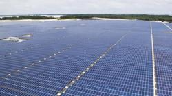 Công ty đa dạng năng lượng tái tạo duy nhất niêm yết hose tăng cường hợp tác quốc tế