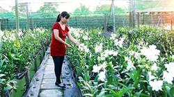 Nữ thạc sỹ bỏ việc nghiên cứu về rốn phèn trồng hoa lan làm giàu