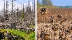 Những thảm họa đáng sợ nào có thể xảy ra nếu rừng Amazon biến mất?