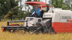 """Sản xuất lúa gạo: Yếu công nghệ, liên tục """"khát"""" vốn"""