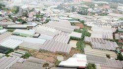 Đà Lạt: Hai mặt của sản xuất nông nghiệp trong nhà kính