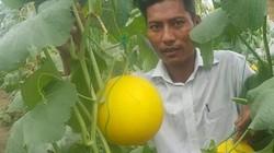 Thanh Hóa: Bỏ nghề buôn về trồng dưa vàng chóe, bán đắt hàng