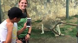 Sức mạnh kinh hoàng của sư tử khi kéo co với đô vật Mỹ