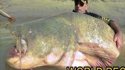 Cận cảnh cá trê khổng lồ nặng 127kg bắt được ở Italia