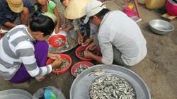 Đồng Tháp: Nước lũ lên cao hơn, giá cá linh non giảm