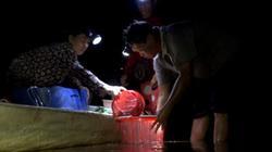 Đồng Tháp: Lũ về, dân đội đèn bắt cá linh cả đêm trên đồng nước nổi