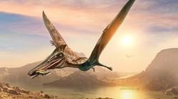 """Phát hiện về loài """"khủng long bạo chúa trên không"""" to như máy bay hiện đại"""