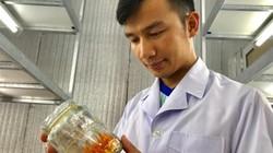 """Bỏ lương 14 triệu/tháng về quê trồng """"siêu nấm"""" kiếm 500 triệu/năm"""