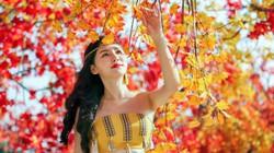 """Giới trẻ Hà Nội """"phát sốt"""" với con đường phong lá đỏ như ở Hàn Quốc"""
