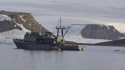 Thuyền của hải quân Nga chìm khi đụng độ hải mã ở Bắc Cực