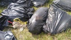 Mexico: Băng đảng thanh toán nhau, vứt 17 bao tải chứa mảnh thi thể ven đường