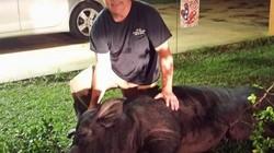Italia: Cùng con trai đi săn trộm lợn rừng, người cha lãnh hậu quả thảm khốc