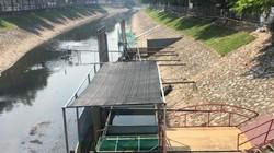 Một tuần sau khi thả, đàn cá Koi Nhật trên sông Tô Lịch sống ra sao?