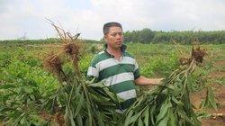 Quảng Nam: Nhổ nhầm cây của dân, chính quyền xã thừa nhận sai sót