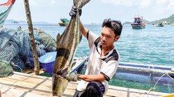 Lênh đênh làng nuôi cá biển to bự trên các quần đảo tỉnh Kiên Giang