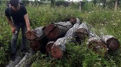 """Vụ gỗ lậu vùng giáp ranh: Xuất hiện văn bản """"lạ"""""""