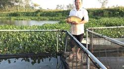 Nghệ An: Nuôi thứ cá chép giòn sần sật thu 70 triệu đồng/vụ