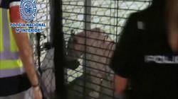 TBN: Khoe nuôi hổ bạch tạng cực kỳ hiếm làm thú cưng và kết cục
