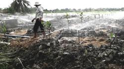 """Tiền Giang chuyển đổi 200.000ha đất lúa """"chạy"""" hạn, mặn"""
