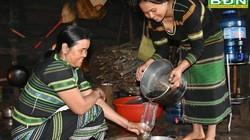 Đắk Nông: Chặt cây chuối rừng đốt thành than làm món ăn quên sầu