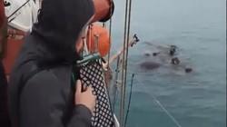 Chơi đàn trên biển, lát sau thấy điều kỳ lạ đến kinh ngạc xảy ra