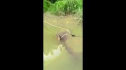 Đi câu cá, phát hiện xác voi với vết đạn bắn trên sông ở Malaysia