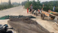 Nguyên nhân bất ngờ khiến hàng tấn cá chết trắng suốt 4km ở bờ biển Hà Tĩnh