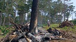 """Lâm Đồng: Rừng cộng đồng chờ thu hồi vẫn bị """"xẻ thịt"""""""