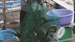 An Giang: Chợ đầu nguồn mùa lũ, rắn bông súng bán đắt hàng