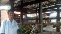 Đắk Lắk: Trai phố núi nuôi 2 loài có sừng, loài nào bán cũng đắt hàng