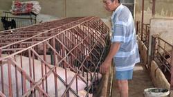 Đồng Nai: Chậm hỗ trợ thiệt hại vì dịch tả lợn châu Phi