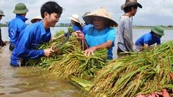 Thêm ưu đãi bảo hiểm cây lúa