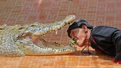 Nghẹt thở màn chui đầu vào miệng cá sấu
