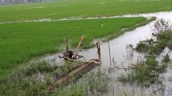 An Giang, Gia Lai: Lũ gây thiệt hại lớn cho sản xuất nông nghiệp
