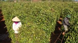 Đồng Nai khuyến khích sản xuất nông nghiệp xanh