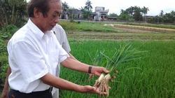 Phân bón Bồ đề 688: Thích hợp làm  nông nghiệp hữu cơ