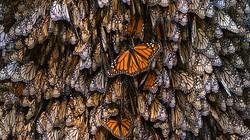 """""""Vương quốc bướm"""" - thế giới cổ tích có thật"""