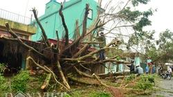 Hình ảnh Thái Bình tan hoang sau bão Sơn Tinh