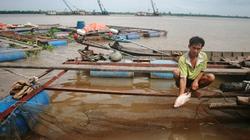 Vĩnh Long: Hơn 300 bè cá đang bị sạt lở đe dọa