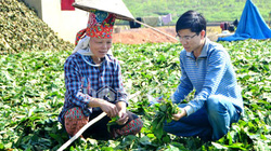 Bất thường ồ ạt chặt cây rừng lấy lá bán cho thương gia Trung Quốc