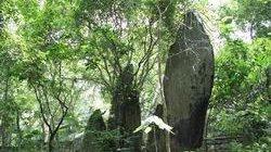 Thành lập Khu rừng K9