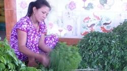 Thu nhập cao từ cây rau ngót