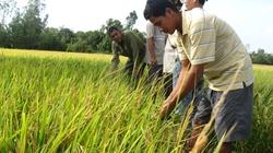 Tạo nguồn nhân lực cho ngành trồng lúa