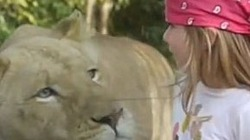 """Cô bé """"đùa"""" sư tử như chơi với… mèo"""
