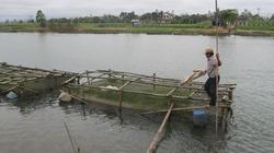 Thu nhập khá từ nuôi cá lồng trên sông Bồ