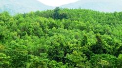 Trồng rừng tăng nguồn lợi cho dân