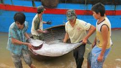 Việt Nam xuất khẩu  cá ngừ thứ 3 thế giới