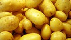 Khoai tây giống  tăng giá gấp 3 lần